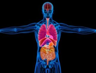 Cómo afecta el alcohol a su cuerpo